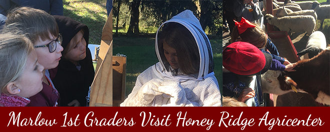 Marlow Elementary 1st Graders Visit Honey Ridge Agricenter