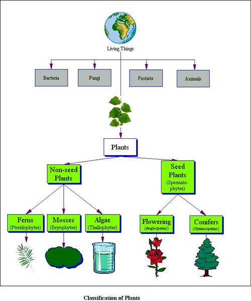 Pridgen Jason Fifth Grade Plants – Vascular and Nonvascular Plants Worksheet