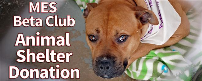 Animal Shelter Pillow Donation : News Archive / 2015-16